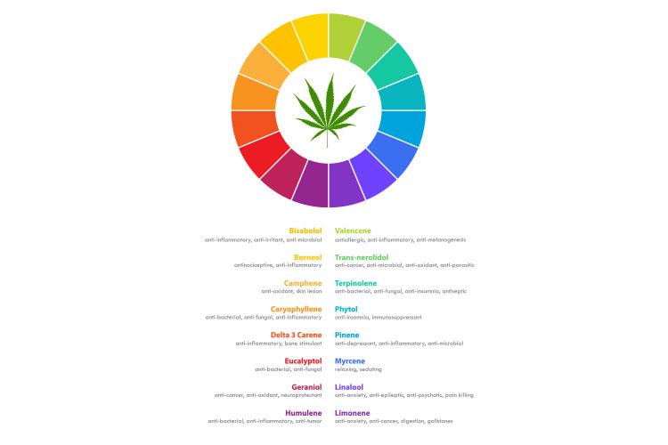 cannabis plant 3